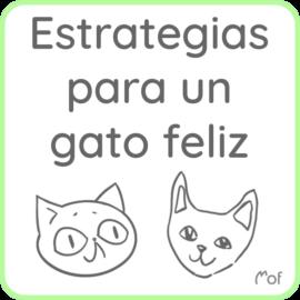 Estrategias para un gato feliz